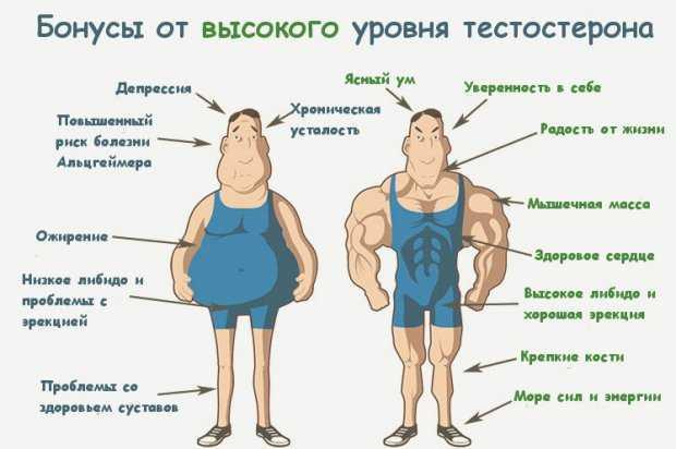 Влияние тестостерона на организм мужчины