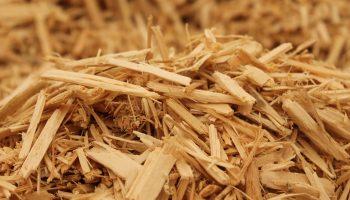 Способы утилизация деревьев и древесных отходов